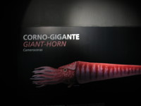 Thumbnail image for corno.JPG